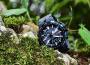 那一抹蓝的迷恋——卡西欧PRW-6100Y-1APR
