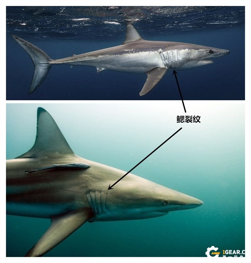 颜值低调,实用至上——Tiburon(鲨鱼)折刀测评报告